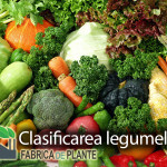 clasificarea-legumelor