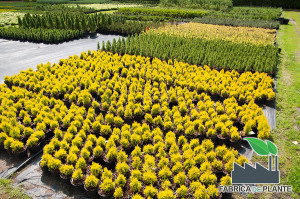 plante-de-gradina-pepiniera